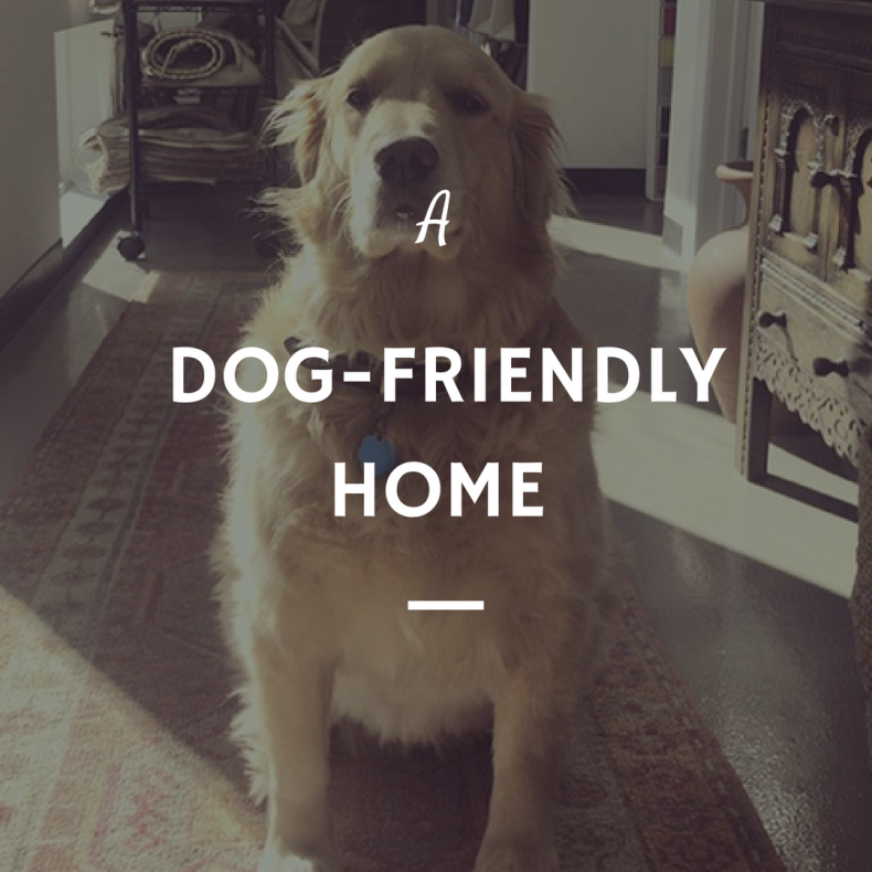 Abby's Guide to Buying a Dog-friendly Home